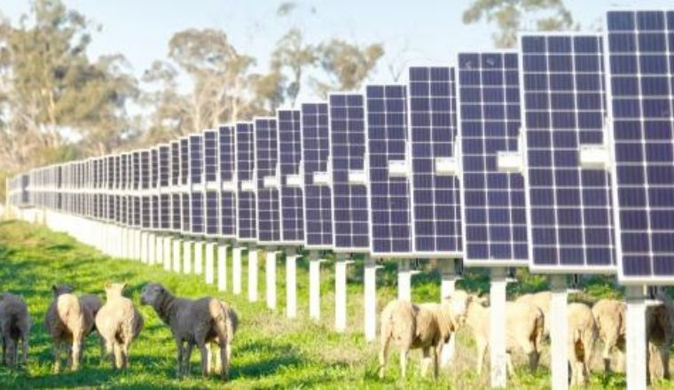 A farm with solar panels and sheep